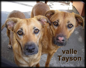 Valle y Tayson, dos hermanos muy unidos... ¿nos ayudas a seguir juntos? ¡READOPTADOS!