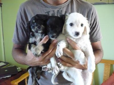 Unos cachorretes muy afortunados... ¡ADOPTADOS!