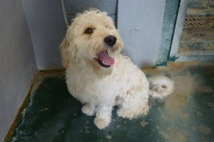 SUSI, una dulce cachorrita buscando hogar...¡ADOPTADA!