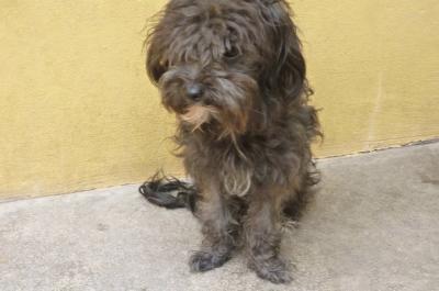 CAMPANILLA, cachorrita de tamaño mini en adopción...¡ADOPTADA!